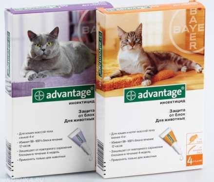 Специальные капли для кошек от блох