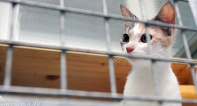 Кот на карантине за решёткой