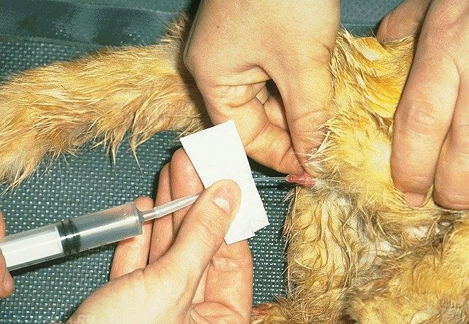 Лечение оксалатов у котов