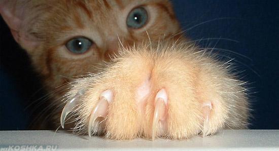 Кошка выпустила большие когти
