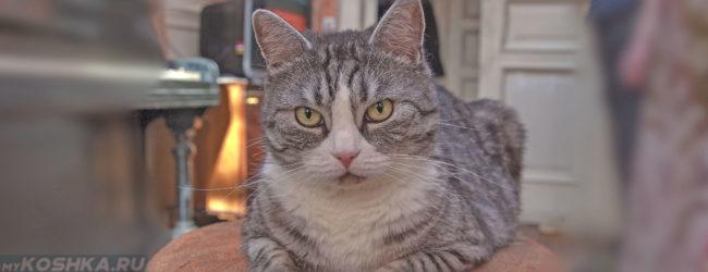 Кошка в возрасте 6 лет