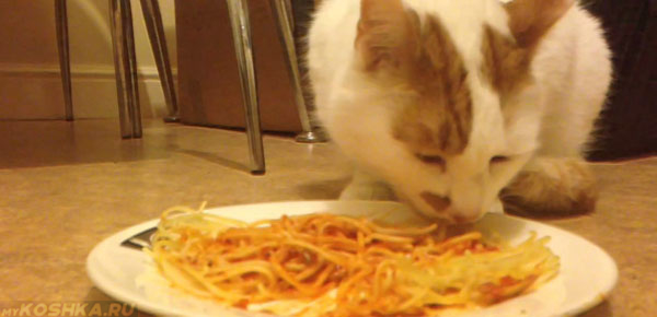 Кошка с аппетитом ест макароны