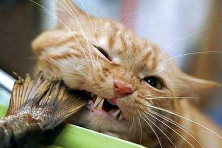 Кошка с удовольствием ест мойву