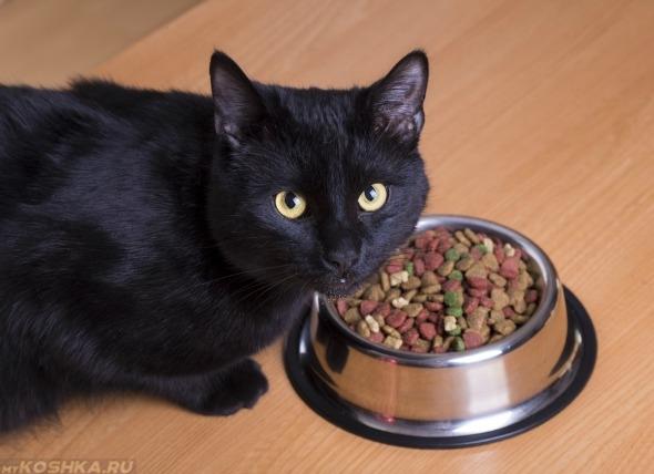 Кошка и миска с гипоаллергенным кормом