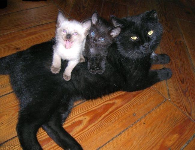 Кошка и её котята лежат у неё на спине