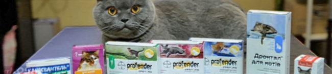 Кошка и лекарства от глистов