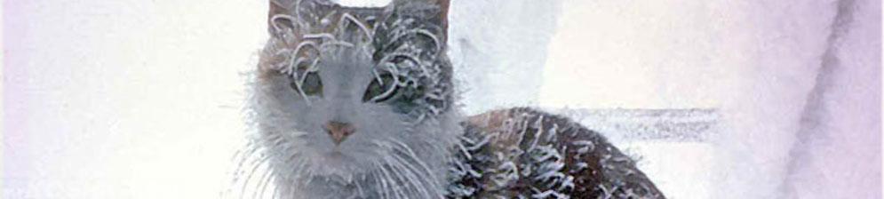 Кошка находится на улице при сильной отрицательной температуре