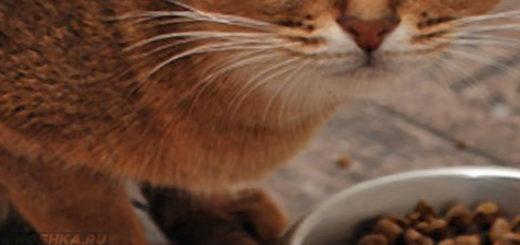Кошка не хочет есть