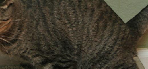 Кошка долго сидит в лотке и не может пописать