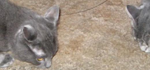 Кошка обнюхивает пол где нагадила