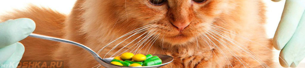 Пилюли на ложке и отравившаяся кошка