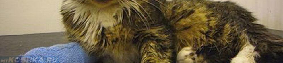 Кошка на лечении в стационаре