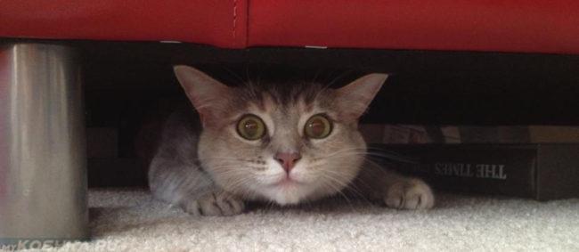 Кошка прячется под диваном