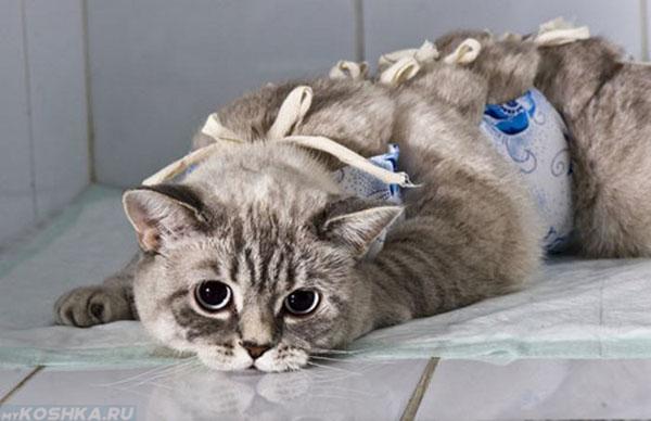 Кошка после стерилизации лежит в попоне