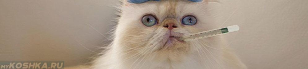 Кошка простудилась и градусник во рту