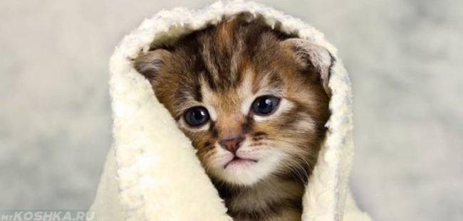 Котёнок переохладился и греется под одеялом