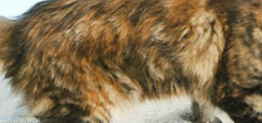 Кошка страдает от поноса