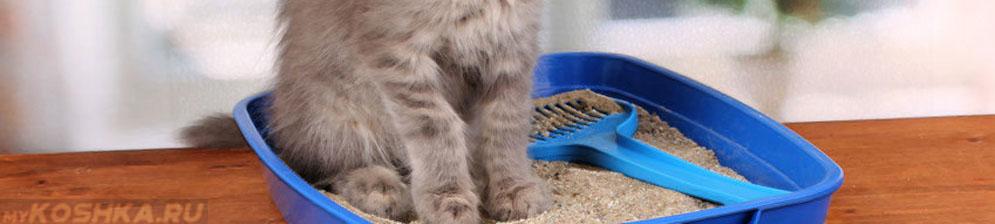 Слизь в кале у кота: причины возникновения, лечение