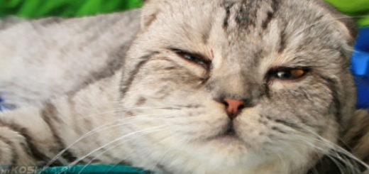 Вялая кошка лежит на диване