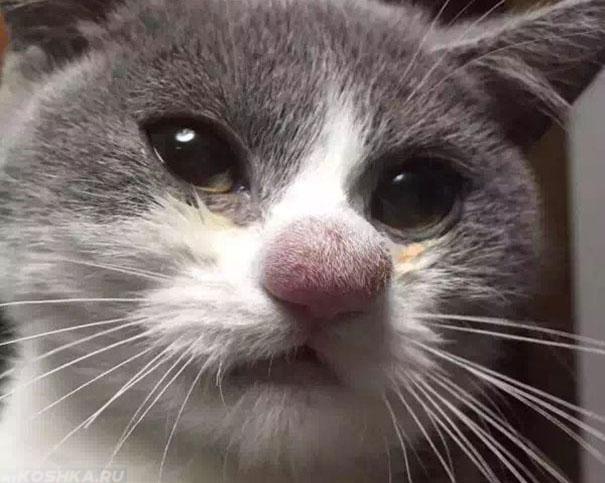 Аллергия у кошки на носу на укус осы