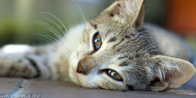 Кот лежит на полу и болеет
