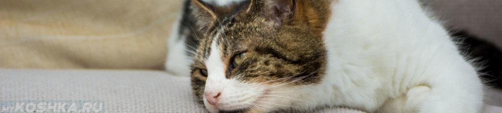 Кот страдающий от поноса