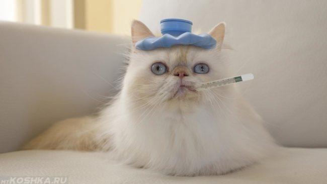 Пушистый кот с грелкой на голове и градусником во рту лежит на диване