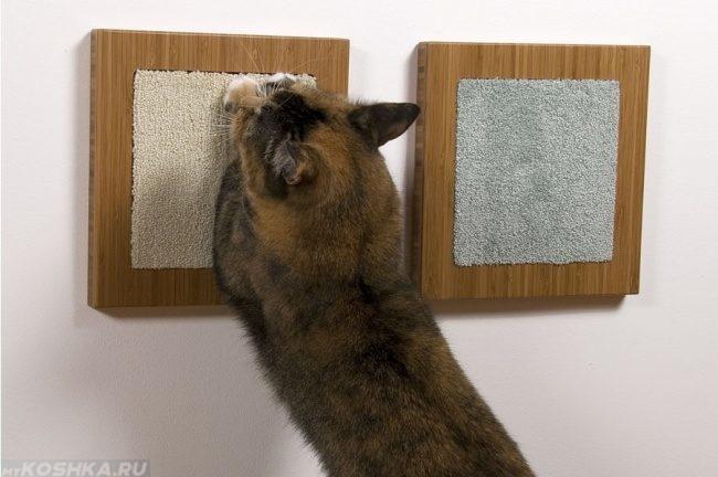 Кот точит когти об когтеточку на стене