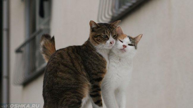 Полосатый кот и белая кошка сидят рядом на улице