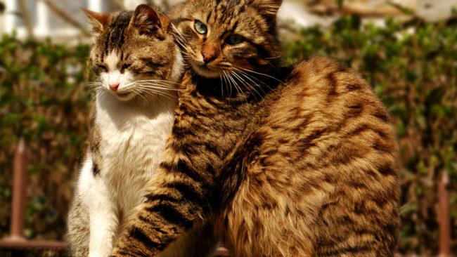 Кошка и полосатый кот сидят на улице и обнимаются