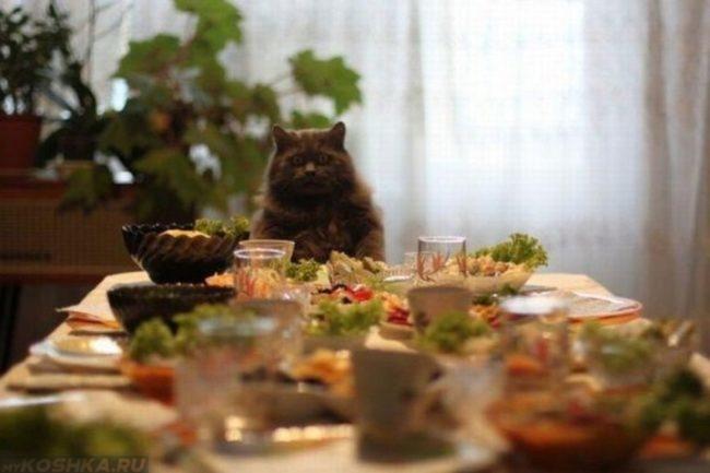 Кот и стол где много еды