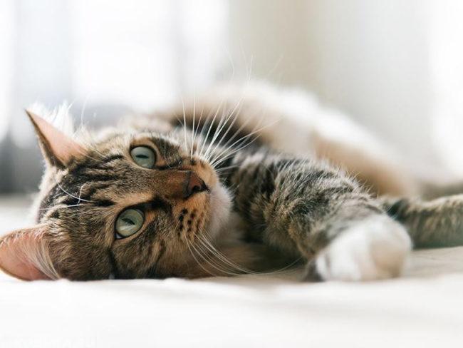 Полосатый кот лежит на земле