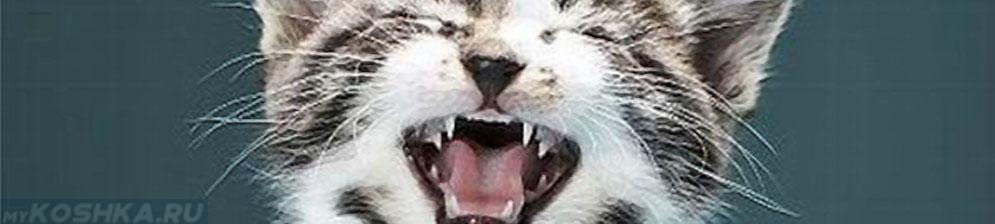 Кот мяукает без причины