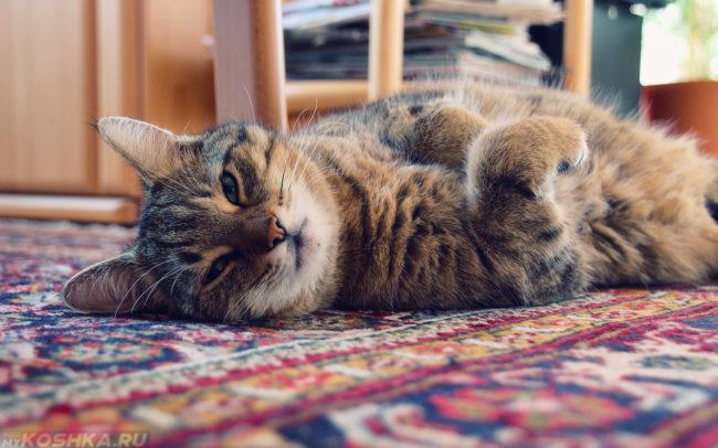 Серый полосатый кот лежит на цветном ковре