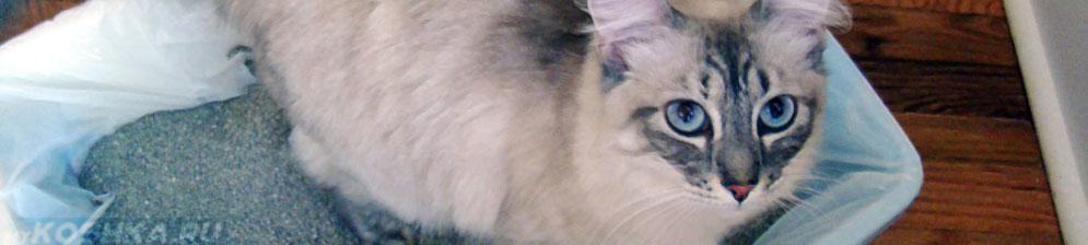 Кот долгое время сидит на лотке из-за поноса