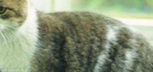 Кот сидит на лотке при поносе