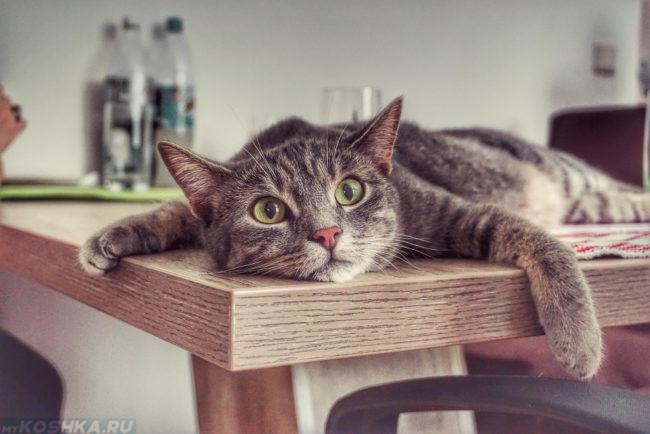 Серый кот лежит на деревянном столе на кухне