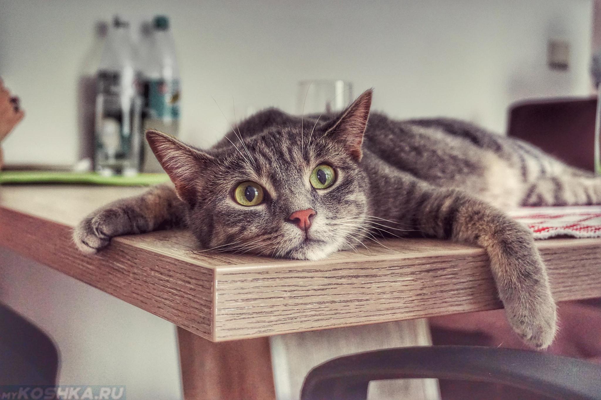 Понос у старого кота чем лечить в домашних условиях