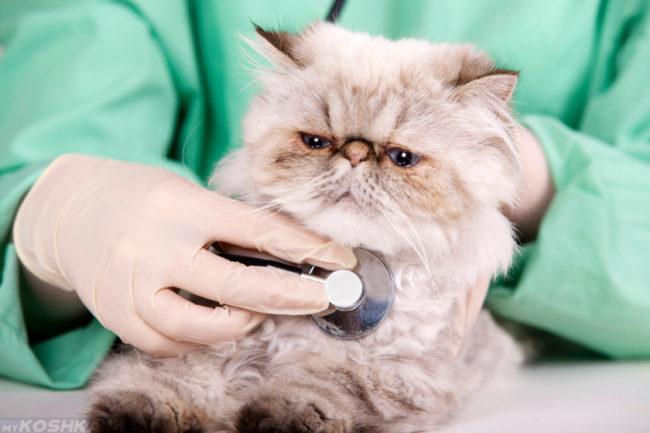 Ветеринар в зеленом халате и перчатках слушает пушистого кота с помощью стетоскопа