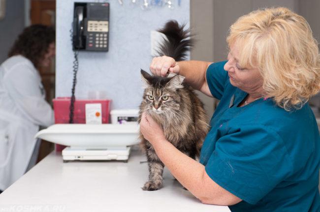 Женщина ветеринар гладит пушистого кота на столе