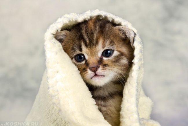 Полосатый котенок завернутый в белое махровое полотенце замёрз