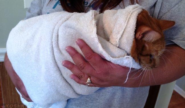 Рыжий кот на руках в белом махровом полотенце