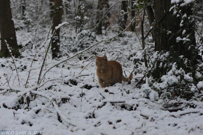 Рыжий кот гуляет в заснеженном лесу среди деревьев