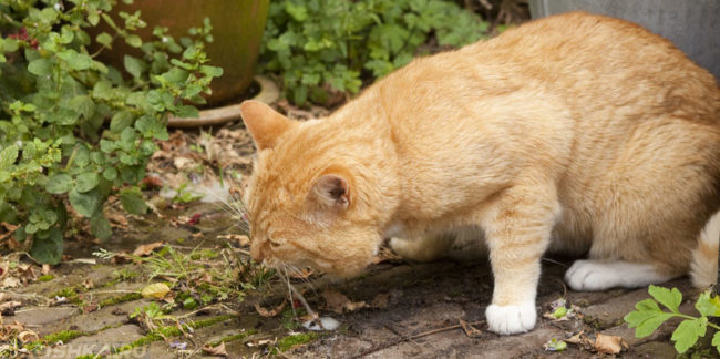 Кота сильно вырвало на землю