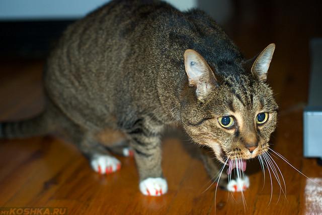 Кота рвёт шерстью
