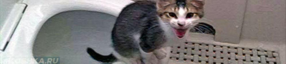 Приученный гадить на унитаз котёнок