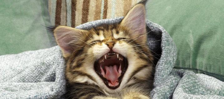 у кошки неприятный запах изо рта