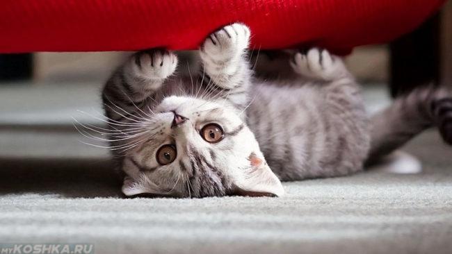 Котёнок точит когти об диван