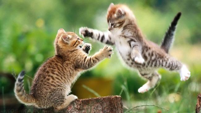 Коты играют в активные игры летом на природе