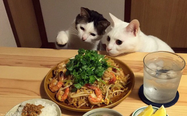 Кошки и человеческая еда на столе